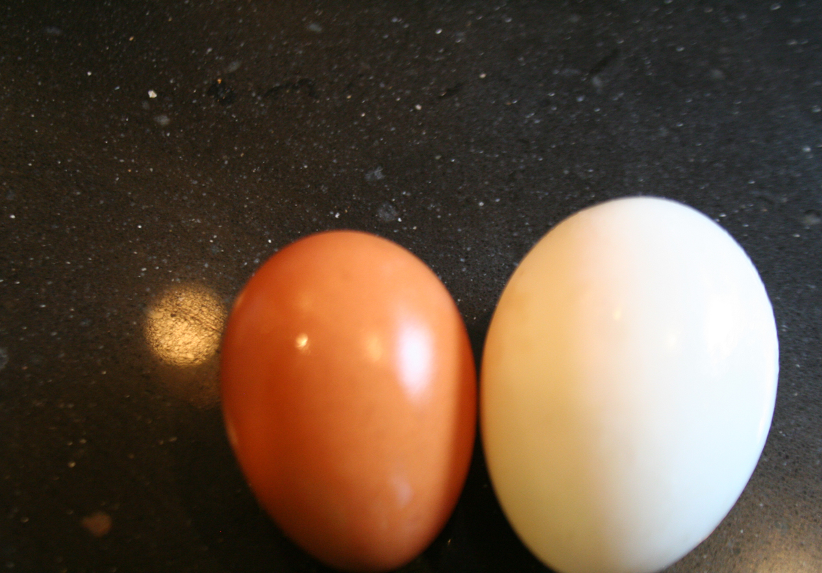 Chicken Egg vs. Duck Egg