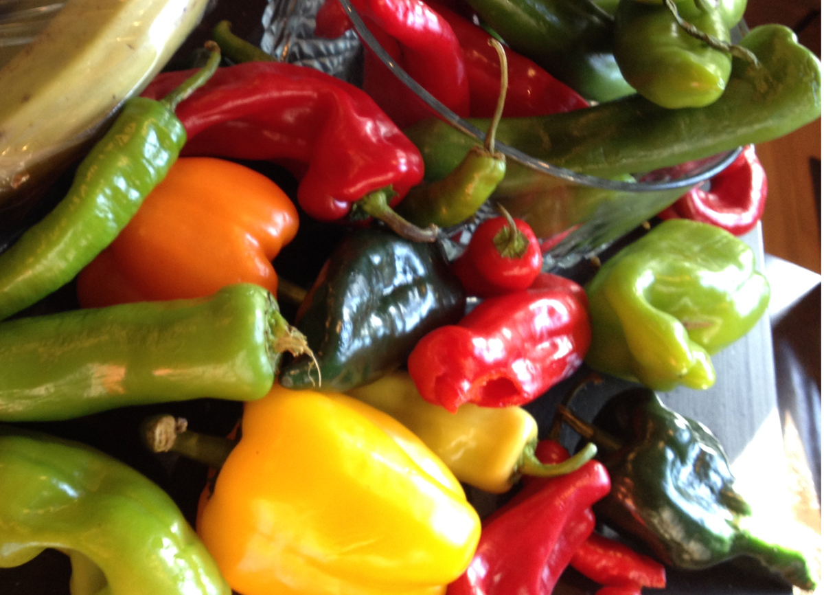 Lots of Assorted Peppers for making Piccalilli Pepper Relish